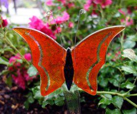 Oranger Fusing-Schmetterling