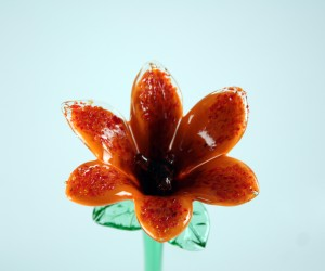 Orange Glasblume